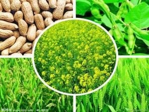 Oxidizing Agent TMAO98% CAS NO:62637-93-8 Fertilizer Additive