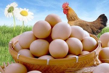 Efecto da diludina no rendemento de posta e aproximación ao mecanismo dos efectos nas galiñas