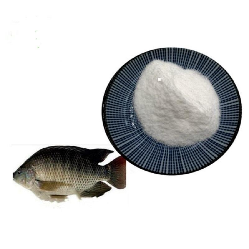 DMPT FISH 1