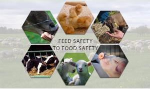 Animal Feed Additive Manufacturer