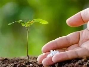 Metyl donor trimethylamin-N-oxid dihydrát 98% přísada hnojiva
