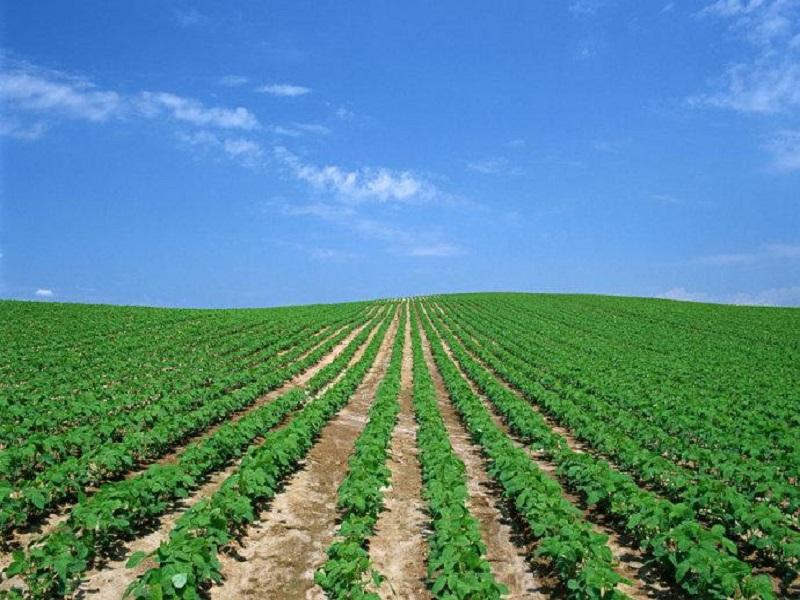 Fertilizer additive