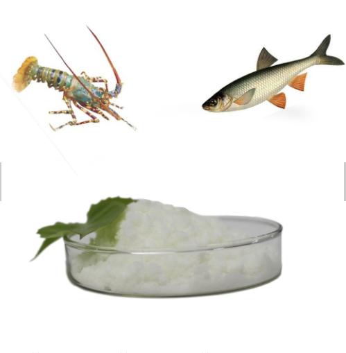 Fish shrimp-SHRIMP