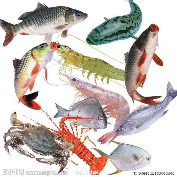 TMAO--Fish feed additive