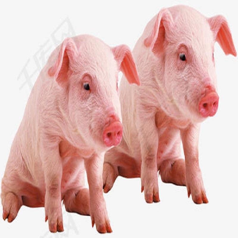 Calidade e seguridade do porco: por que pensos e aditivos para pensos?