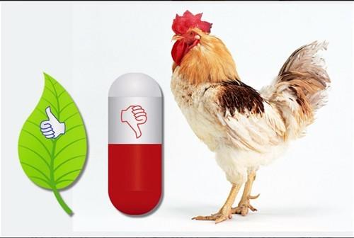 Como usar o diformato de potasio para mellorar a resposta ao estrés térmico das galiñas poñedoras a alta temperatura continua?